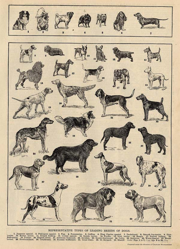 print Representative Types of Leading Breeds of Dogs by Funk&Wagnalls Company