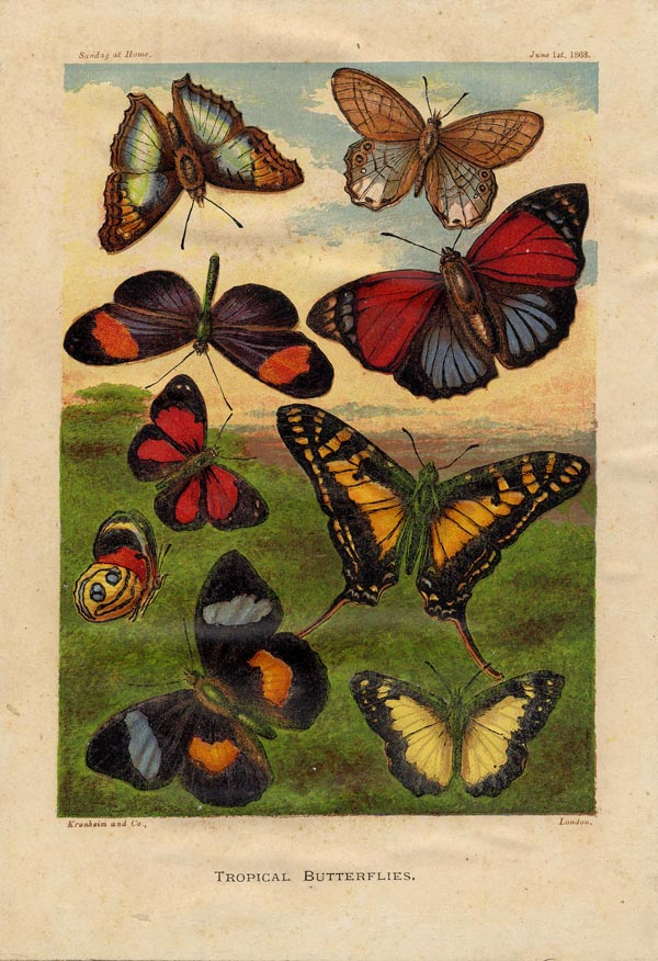 print Tropical butterflies by nn